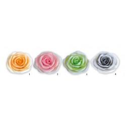 Róża maxima